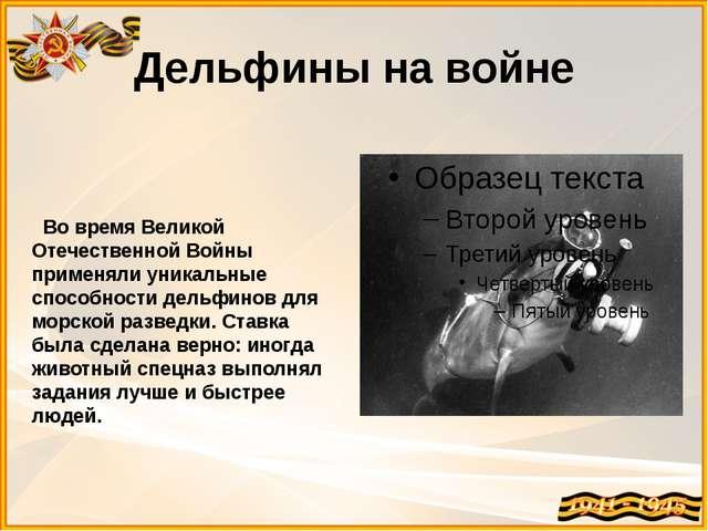 Дельфины на войне Во время Великой Отечественной Войны применяли уникальные с...