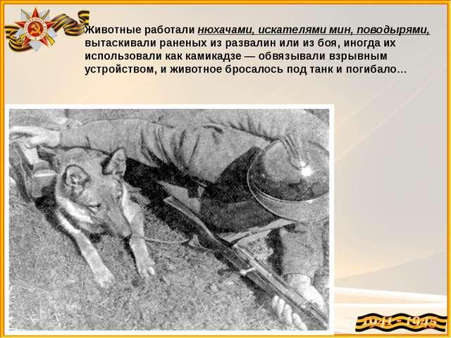 Животные работали нюхачами, искателями мин, поводырями, вытаскивали раненых и...