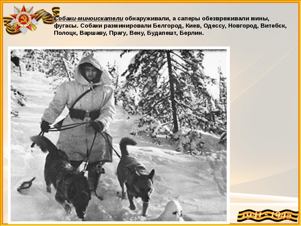 Собаки-миноискатели обнаруживали, а саперы обезвреживали мины, фугасы. Собаки...