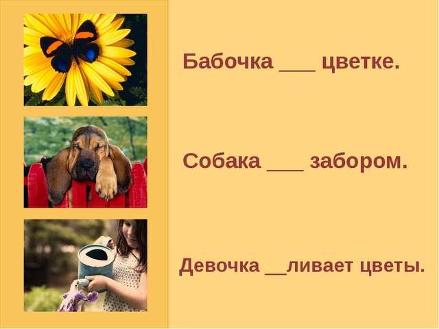 Бабочка ___ цветке. Собака ___ забором. Девочка __ливает цветы.