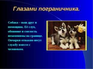 Глазами пограничника. Собака – наш друг и помощник. Её слух, обоняние и смело