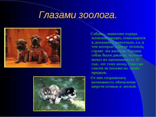 Глазами зоолога. Собака – животное отряда млекопитающих, относящееся к домашн...