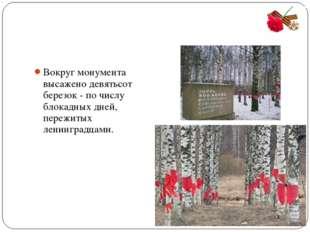 Вокруг монумента высажено девятьсот березок - по числу блокадных дней, пережи