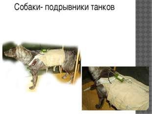 Собаки- подрывники танков шли на смерть, подорвав более 300 танков, 63 из кот