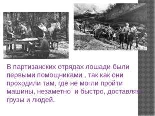 В партизанских отрядах лошади были первыми помощниками , так как они проходил