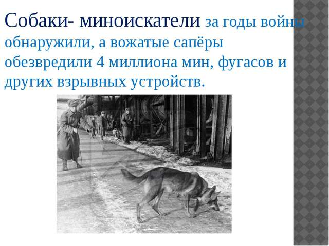 Собаки- миноискатели за годы войны обнаружили, а вожатые сапёры обезвредили 4...