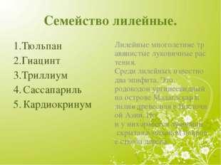 Семейство лилейные. 1.Тюльпан 2.Гиацинт 3.Триллиум 4. Сассапариль 5. Кардиокр