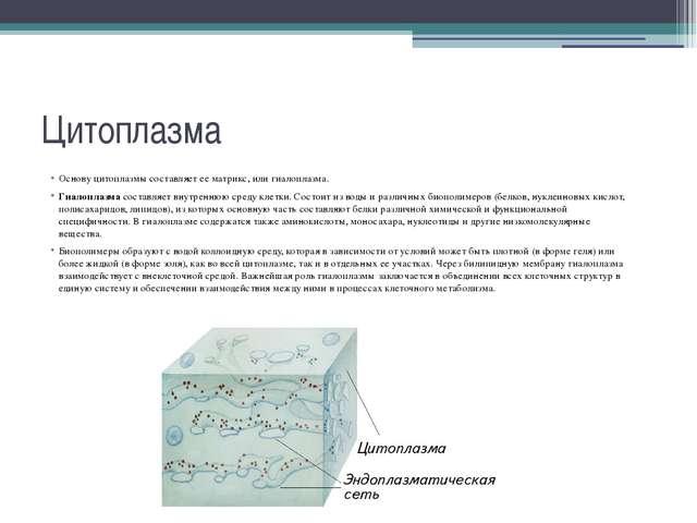 Цитоплазма Основу цитоплазмы составляет ее матрикс, или гиалоплазма. Гиалопла...