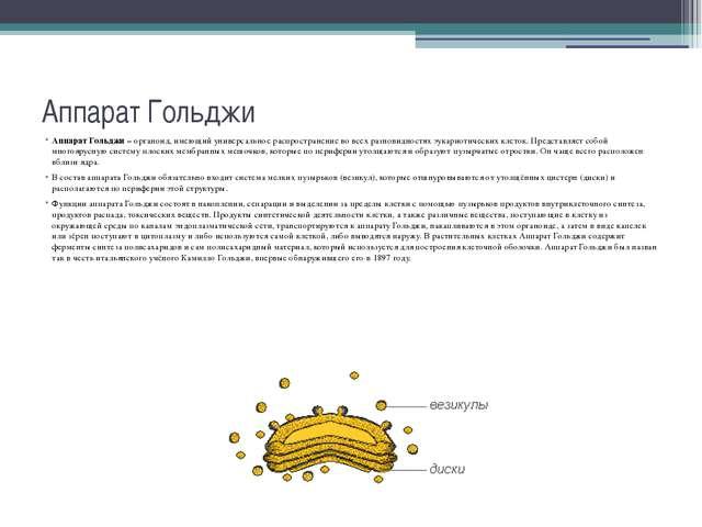Аппарат Гольджи Аппарат Гольджи – органоид, имеющий универсальное распростран...