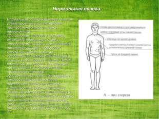 Нормальная осанка характеризуется симметричным расположением частей тела отн