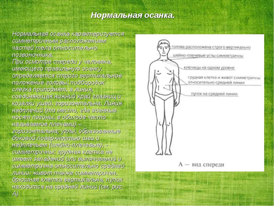 Нормальная осанка характеризуется симметричным расположением частей тела отн...