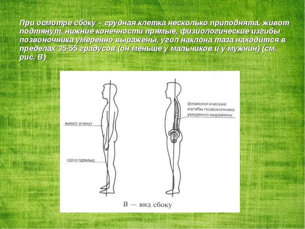 При осмотре сбоку – грудная клетка несколько приподнята, живот подтянут, нижн...