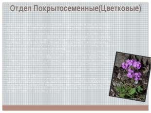 Отдел Покрытосеменные(Цветковые) Цветковые растения наиболее приспособлены к