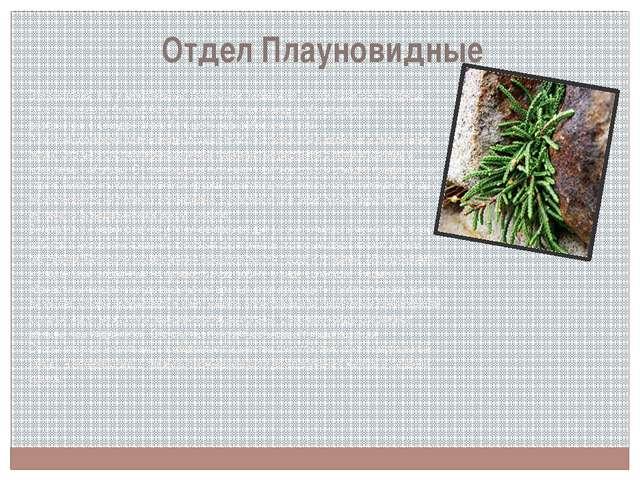 Отдел Плауновидные Эти растения, как и моховидные, произошли, возможно, от пс...