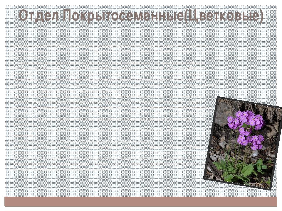 Отдел Покрытосеменные(Цветковые) Цветковые растения наиболее приспособлены к...