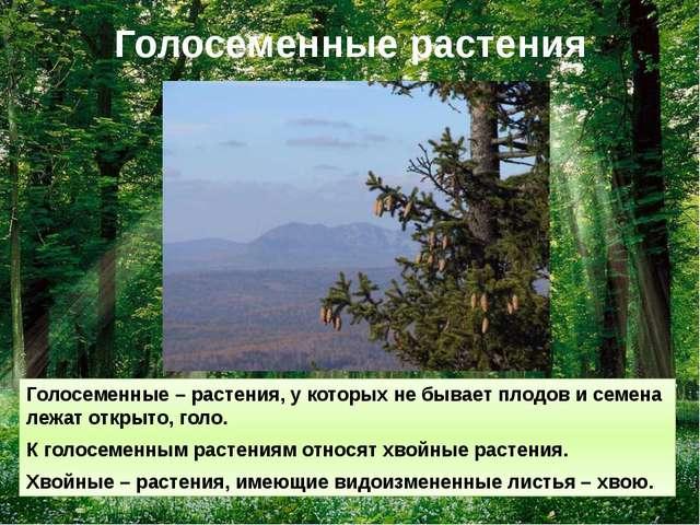 Голосеменные растения Голосеменные – растения, у которых не бывает плодов и с...