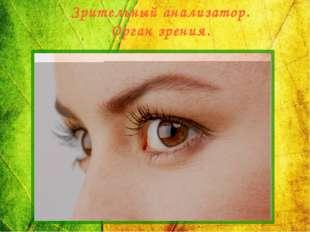 Зрительный анализатор. Орган зрения.