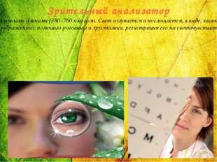 Зрительный анализатор Зрительный анализатор реагирует на свет – видимый спект