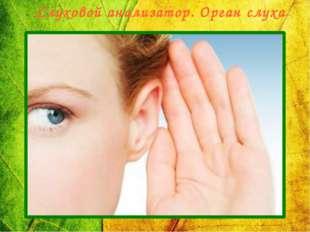 Слуховой анализатор. Орган слуха