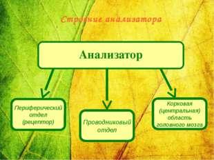 Анализатор Периферический отдел (рецептор) Проводниковый отдел Корковая (цен