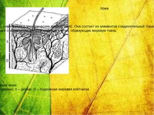 Строение кожи: I – эпидермис; II – дерма; III – подкожная жировая клетчатка