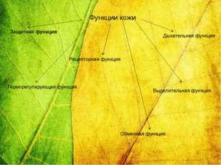 Функции кожи Защитная функция Терморегулирующая функция Дыхательная функция В