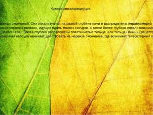 В коже сосредоточено большое количество чувствительных к прикосновению, давл
