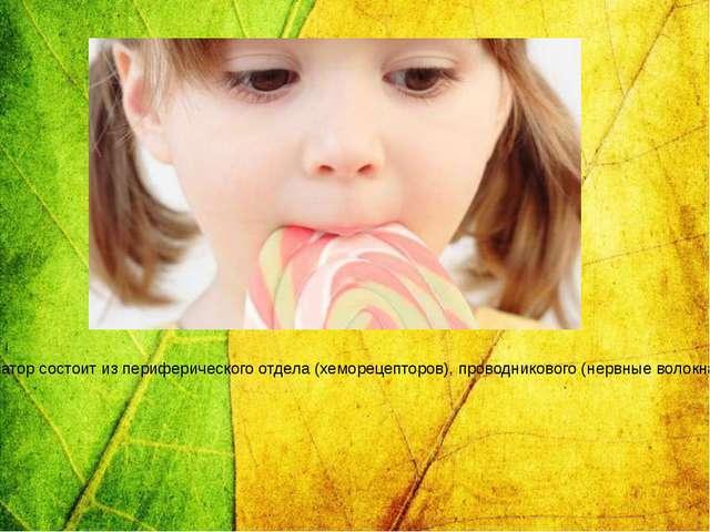 Вкусовой анализатор представляет собой сложную анатомо-физиологическую систем...