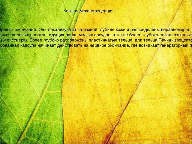 В коже сосредоточено большое количество чувствительных к прикосновению, давл...