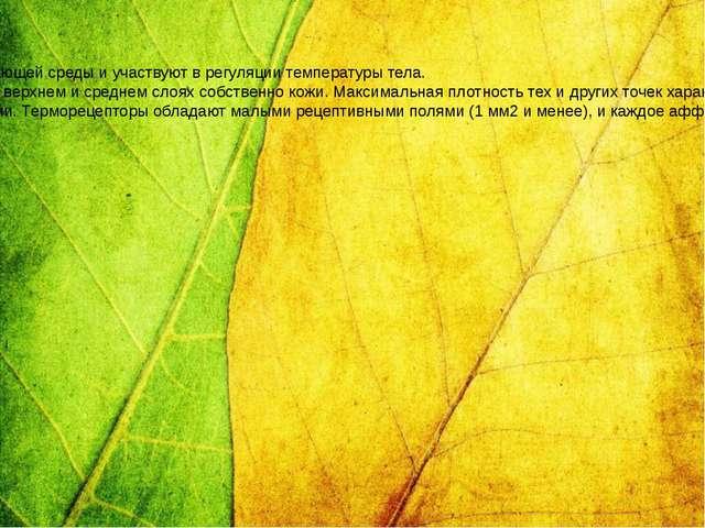 Терморецепция Терморецепция или температурное чувство соотносится с двумя ощу...