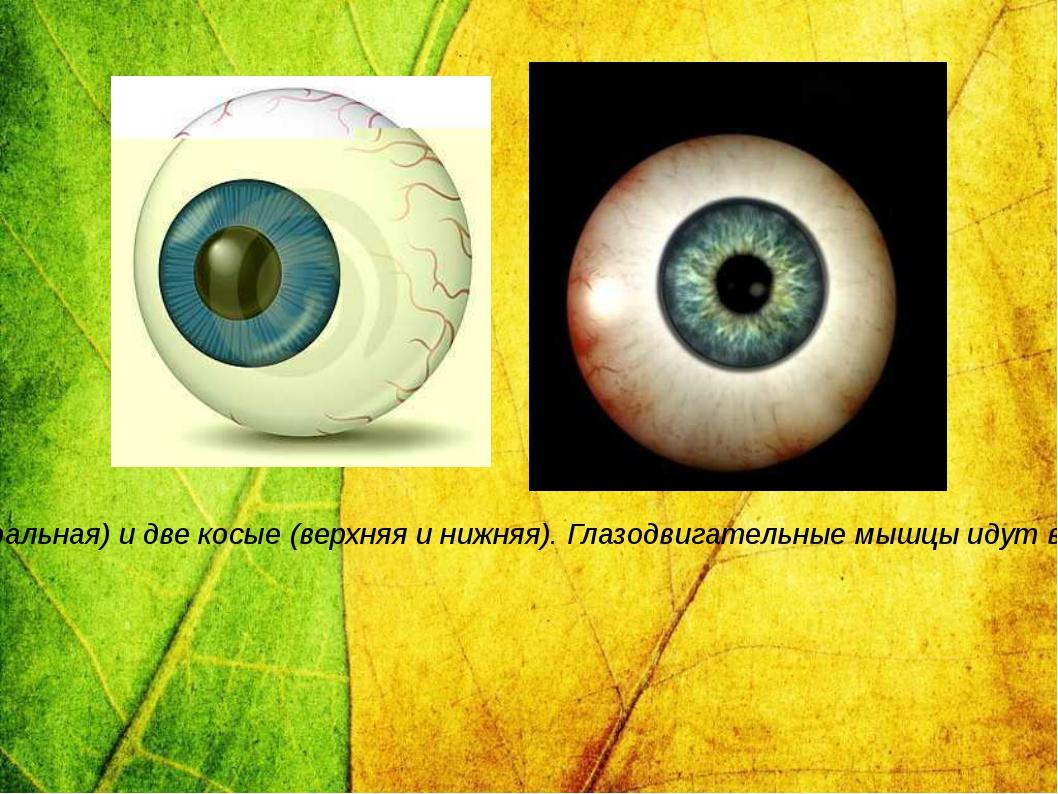 Глазное яблоко приводит в движение шесть поперечнополосатых глазодвигательных...