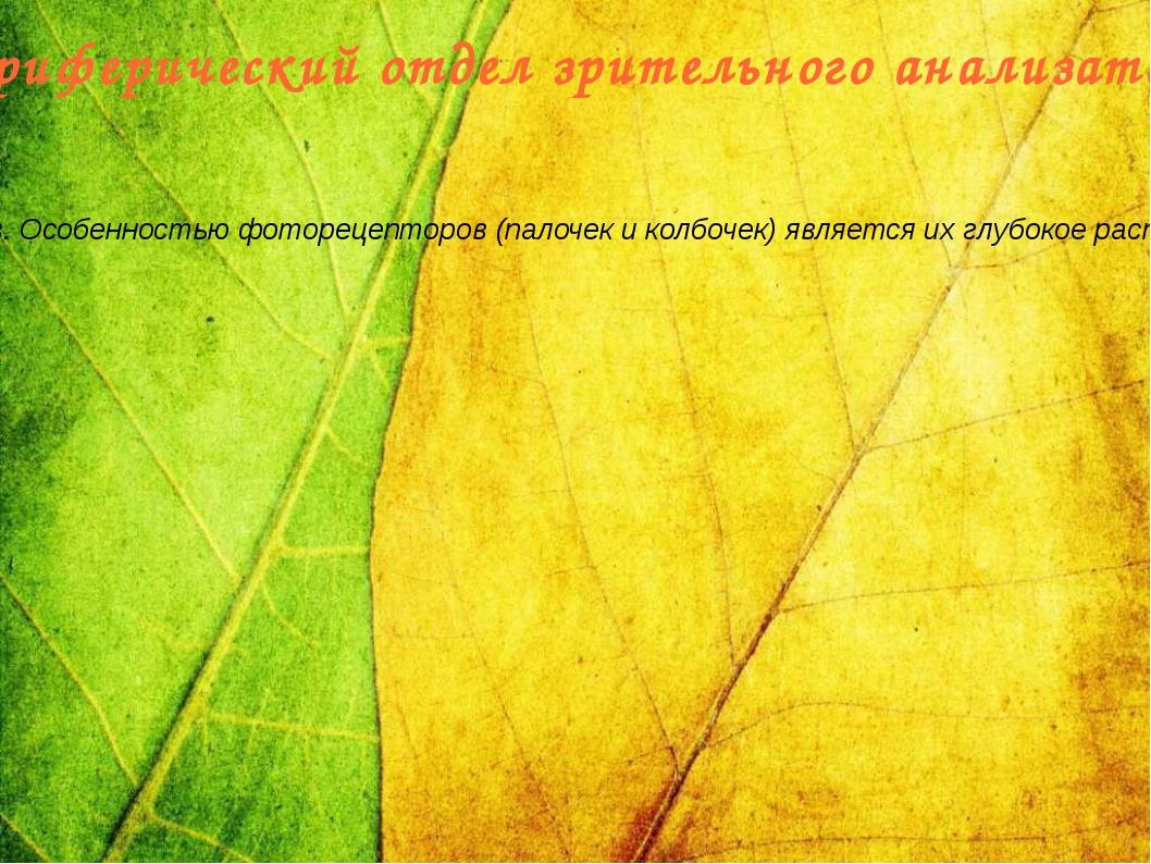 Периферический отдел зрительного анализатора Часть зрительного анализатора, в...