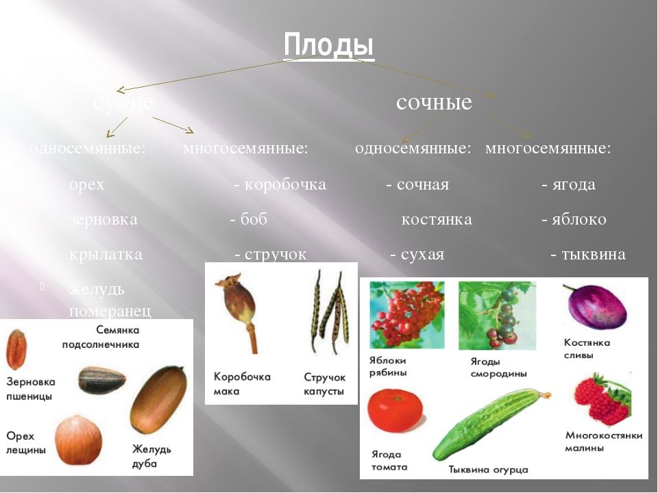 Цветок. Плод. Семя Биология 6