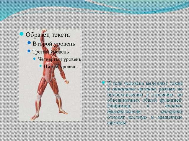 В теле человека выделяют также и аппараты органов, разных по происхождению и...