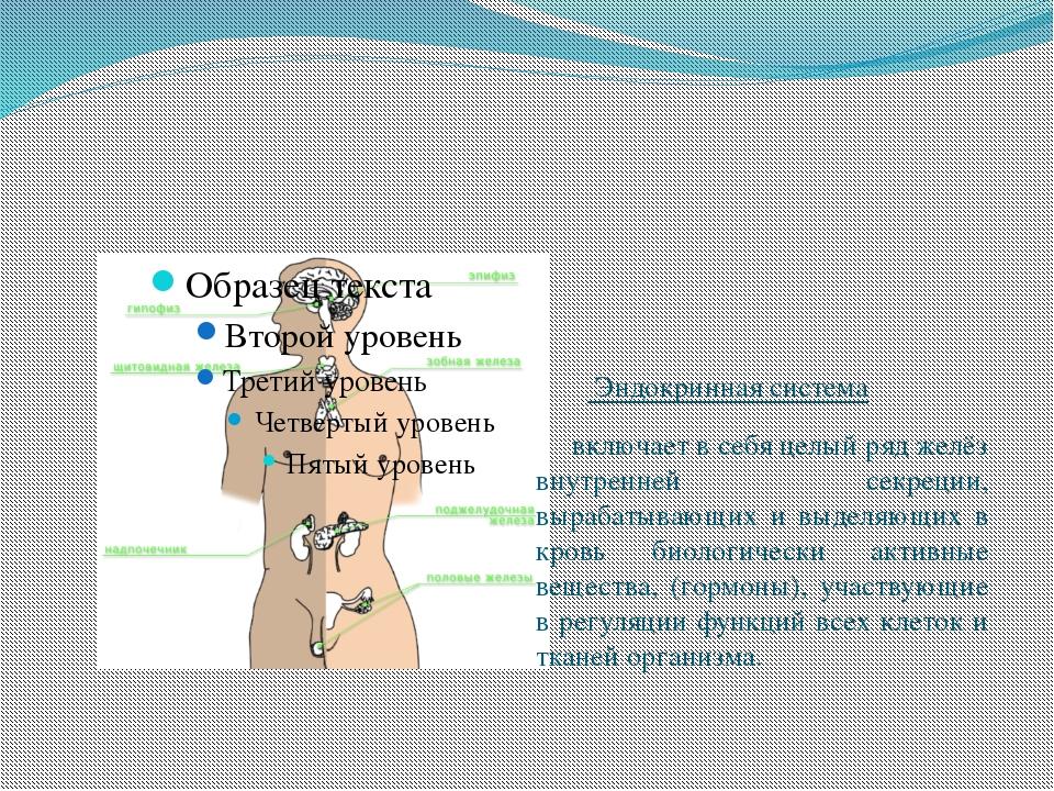 Эндокринная система  включает в себя целый ряд желёз внутренней секреции,...