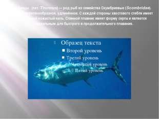 Тунцы́ (лат.Thunnus)— род рыб из семейства Скумбриевые (Scombridae). Тело в