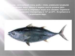 Альбакор - желтопёрый тунец, рыба с очень длинными грудными плавниками, имеет