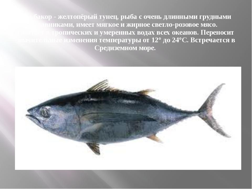 Альбакор - желтопёрый тунец, рыба с очень длинными грудными плавниками, имеет...