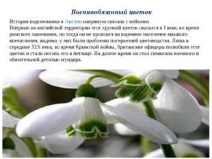 Военнообязанный цветок История подснежника вАнглиинапрямую связана с войнам