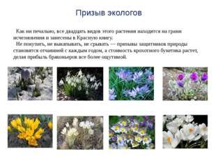 Как ни печально, все двадцать видов этого растения находятся на грани исчезн