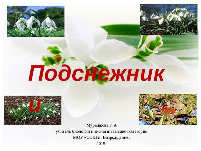 Подснежники  Мурашкова Г. А учитель биологии и экологии высшей категории МОУ...