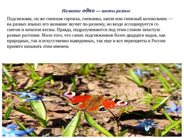 Название одно — цветы разные Подснежник, он же снежная сережка, снежинка, кап...