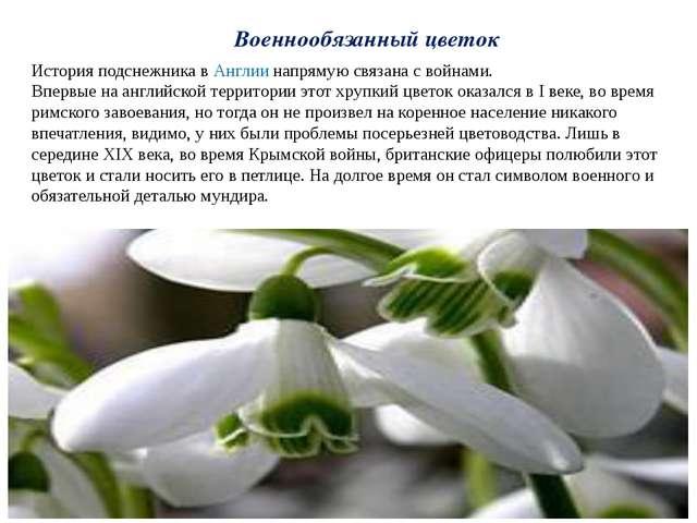 Военнообязанный цветок История подснежника вАнглиинапрямую связана с войнам...