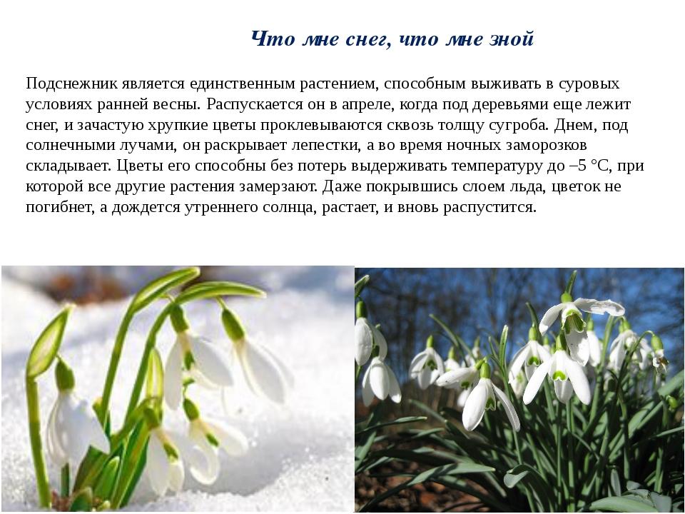 Что мне снег, что мне зной Подснежник является единственным растением, способ...