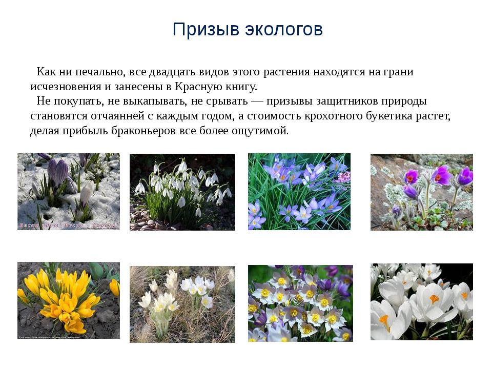 Как ни печально, все двадцать видов этого растения находятся на грани исчезн...