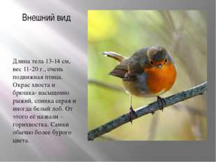 Внешний вид Длина тела 13-14 см, вес 11-20 г., очень подвижная птица. Окрас х