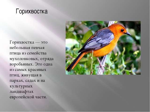 Горихвостка Горихвостка — это небольшая певчая птица из семейства мухоловковы...