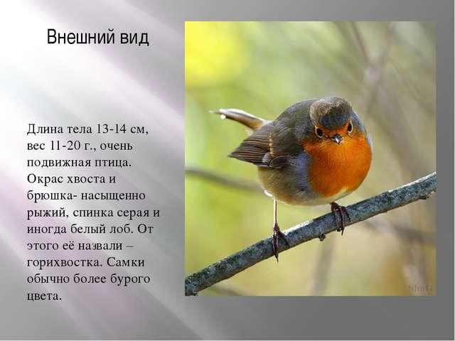 Внешний вид Длина тела 13-14 см, вес 11-20 г., очень подвижная птица. Окрас х...