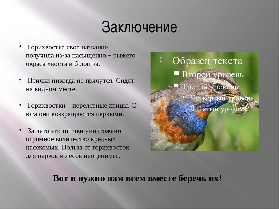 Заключение Горихвостка свое название получила из-за насыщенно – рыжего окраса...