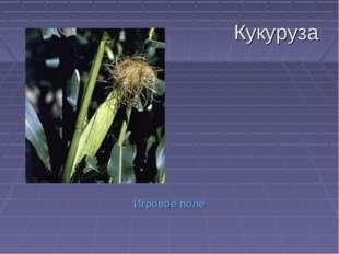 Кукуруза Игровое поле